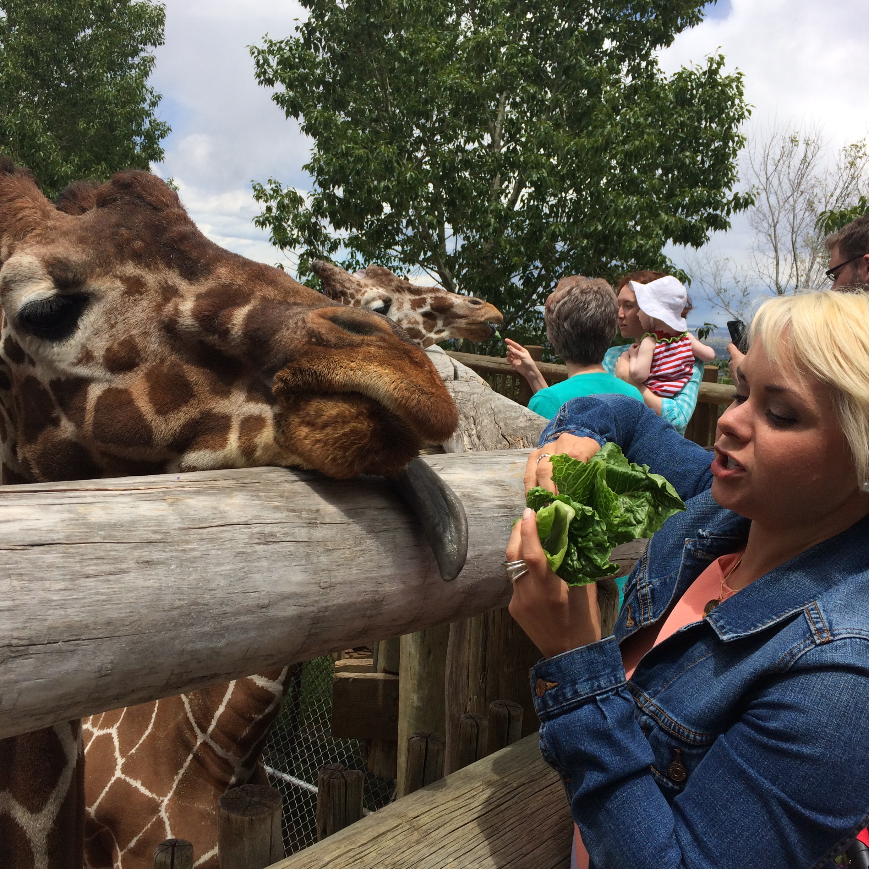 Img Zoo Worker Says Goodbye To Giraffe